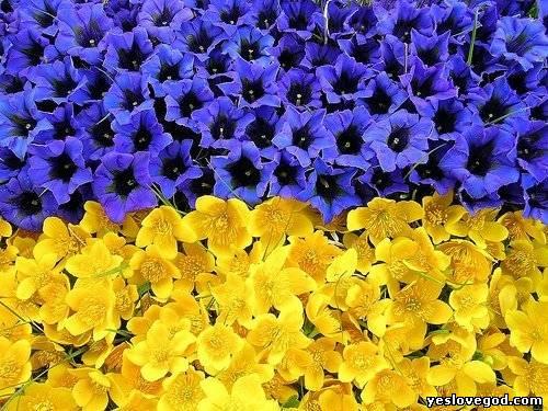 Вітаємо всіх із днем незалежності україни!