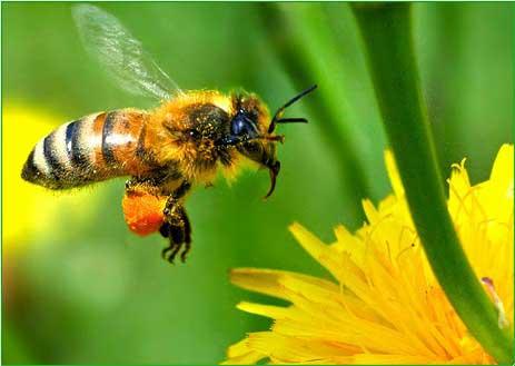 Потруїли бджоли | Волинська газета